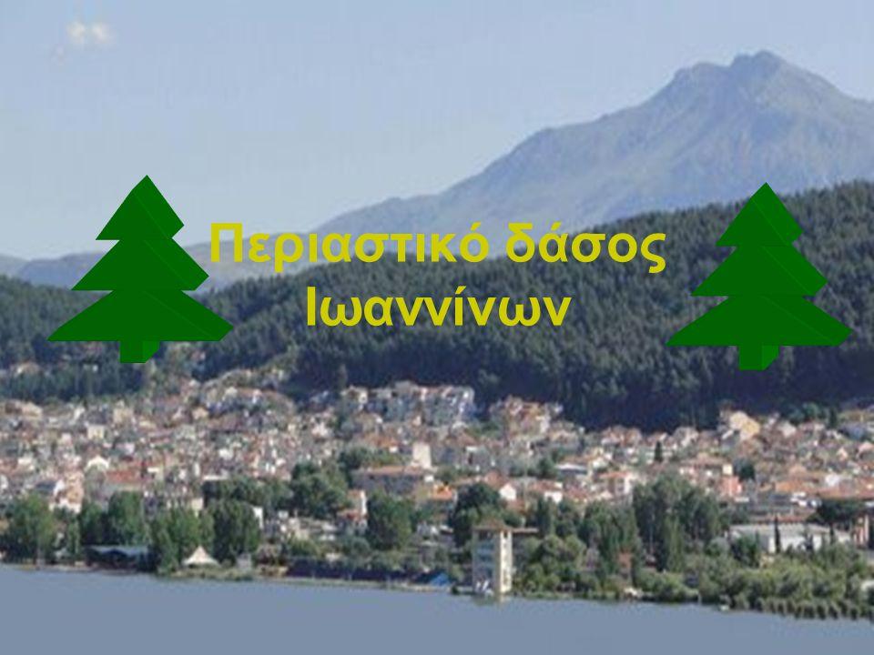 Η πόλη των Ιωαννίνων έχει το μοναδικό πλεονέκτημα να βρίσκεται σε επαφή με δύο ιδιαίτερης αισθητικής αξίας χώρους, τη λίμνη και το δάσος.