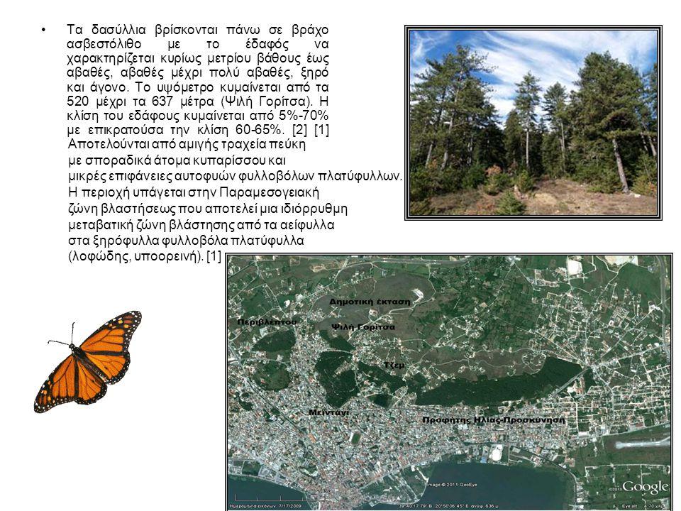 ΑΡΑΙΩΣΕΙΣ ΚΑΙ ΑΝΑΠΤΥΞΗ ΝΕΩΝ ΕΙΔΩΝ Η παρέλευση μεγάλου χρόνου από τη δημιουργία του δάσους με τεχνητή αναδάσωση, σημειωτέων ότι τα δένδρα έχουν σήμερα ηλικία 65-80 χρόνων, χωρίς την εφαρμογή κατάλληλων δασοκομικών χειρισμών έχει δημιουργήσει προβλήματα.