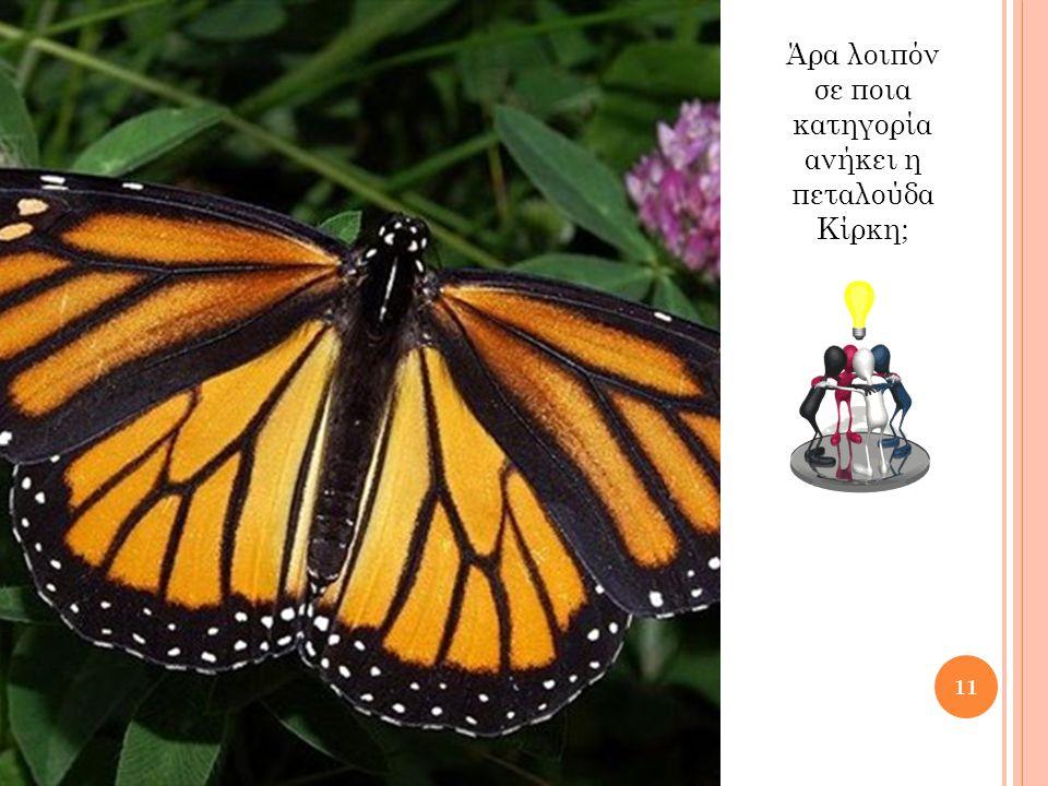 Άρα λοιπόν σε ποια κατηγορία ανήκει η πεταλούδα Κίρκη; 11