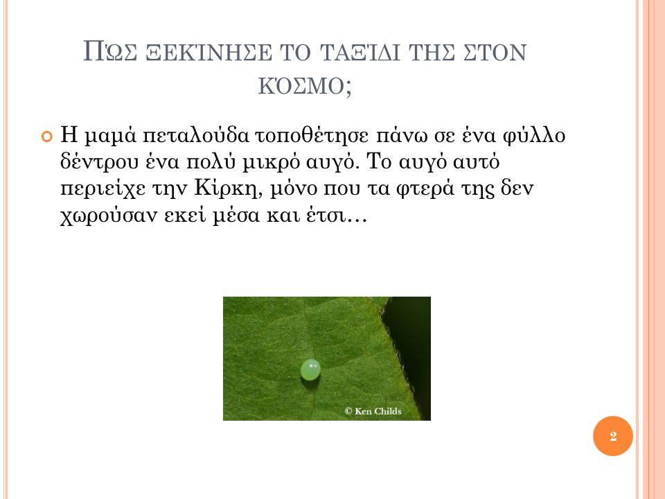 Π ΏΣ ΞΕΚΊΝΗΣΕ ΤΟ ΤΑΞΊΔΙ ΤΗΣ ΣΤΟΝ ΚΌΣΜΟ ; Η μαμά πεταλούδα τοποθέτησε πάνω σε ένα φύλλο δέντρου ένα πολύ μικρό αυγό.