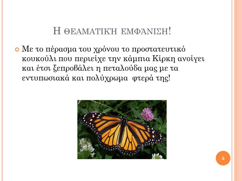 Ε ΠΕΙΔΉ ΌΛΑ ΤΑ ΩΡΑΊΑ ΚΆΠΟΤΕ ΤΕΛΕΙΏΝΟΥΝ … Η διάρκεια ζωής της πεταλούδας μας κυμαίνεται από 8 έως 10 ημέρες εξαιτίας των ανθρώπων οι οποίοι τις κυνηγούν.