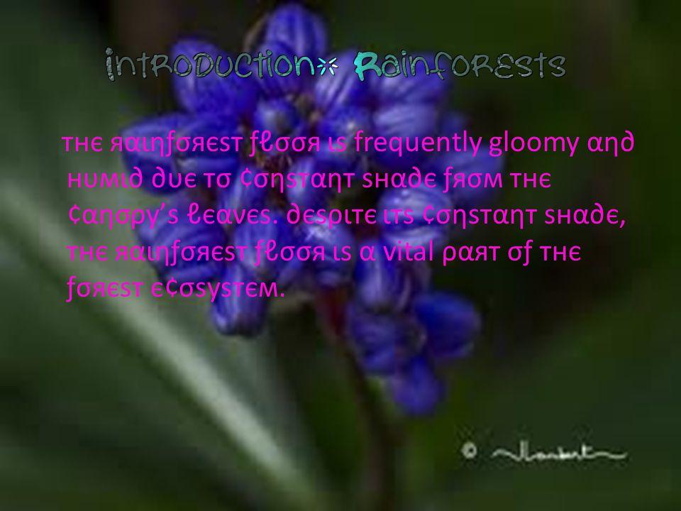 тнє яαιηƒσяєѕт ƒℓσσя ιѕ frequently gloomy αη∂ нυмι∂ ∂υє тσ ¢σηѕтαηт ѕнα∂є ƒяσм тнє ¢αησρу'ѕ ℓєανєѕ.