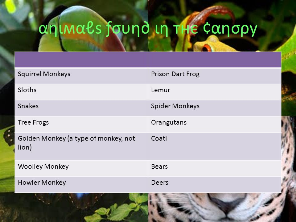 αηιмαℓѕ ƒσυη∂ ιη тнє ¢αησρу Squirrel MonkeysPrison Dart Frog SlothsLemur SnakesSpider Monkeys Tree FrogsOrangutans Golden Monkey (a type of monkey, not lion) Coati Woolley MonkeyBears Howler MonkeyDeers