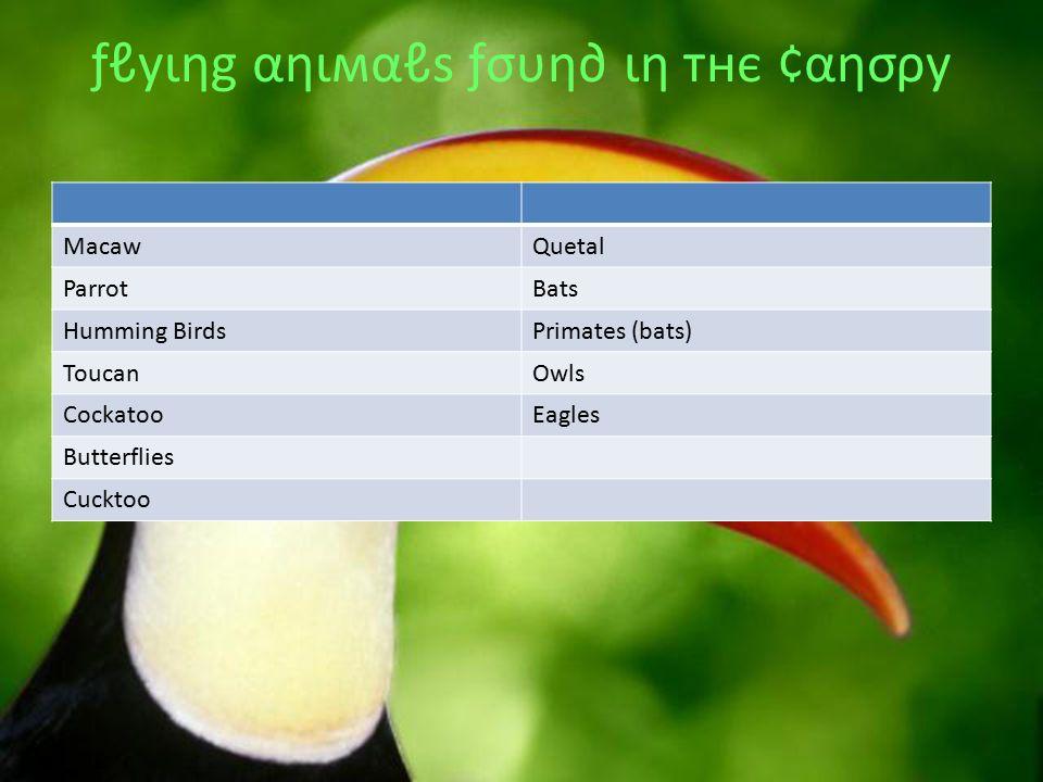 ƒℓуιηg αηιмαℓѕ ƒσυη∂ ιη тнє ¢αησρу MacawQuetal ParrotBats Humming BirdsPrimates (bats) ToucanOwls CockatooEagles Butterflies Cucktoo