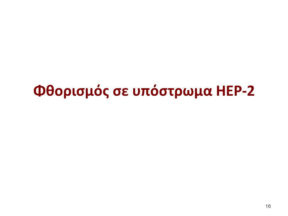 Φθορισμός σε υπόστρωμα HEP-2 16