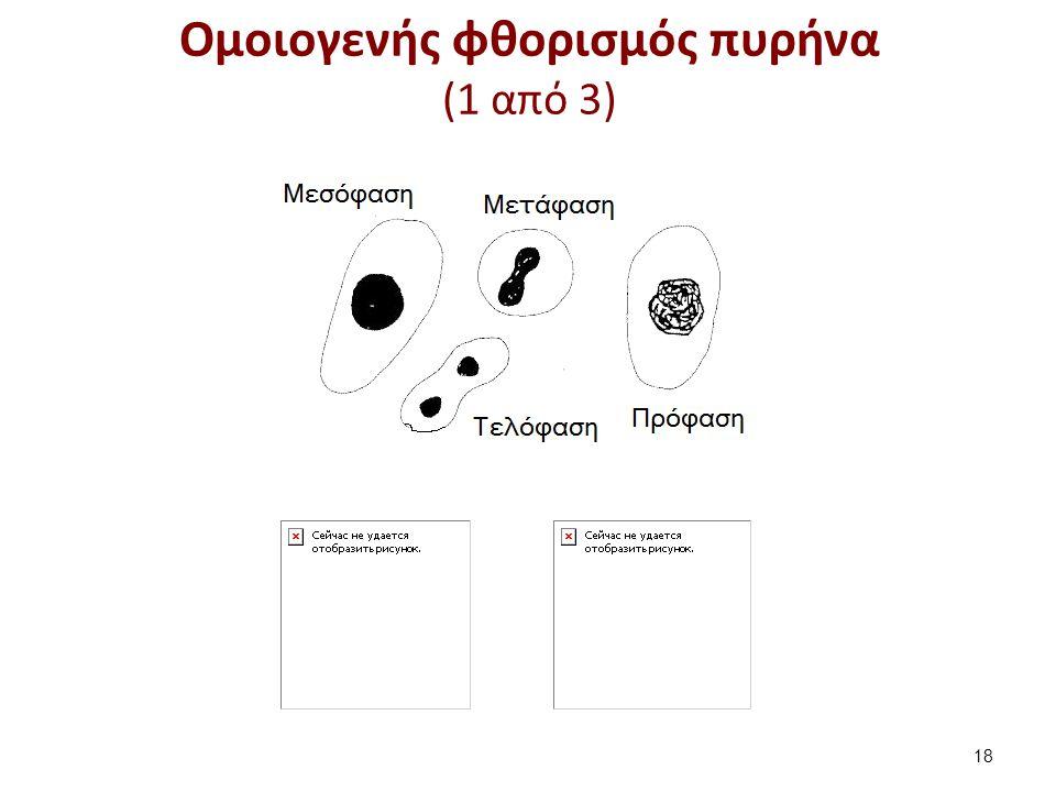 Ομοιογενής φθορισμός πυρήνα (1 από 3) 18