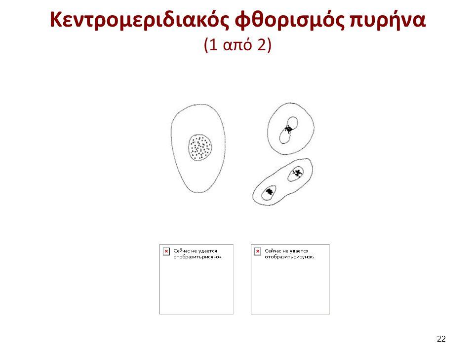 Κεντρομεριδιακός φθορισμός πυρήνα (1 από 2) 22