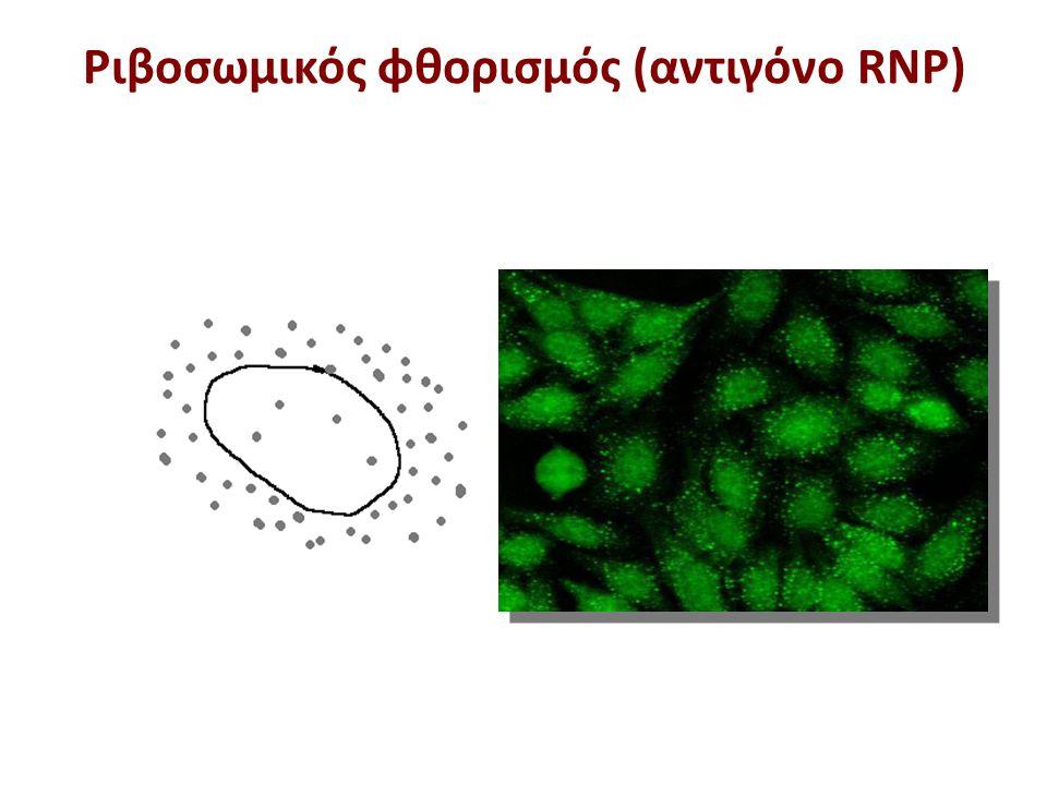 Ριβοσωμικός φθορισμός (αντιγόνο RNP)