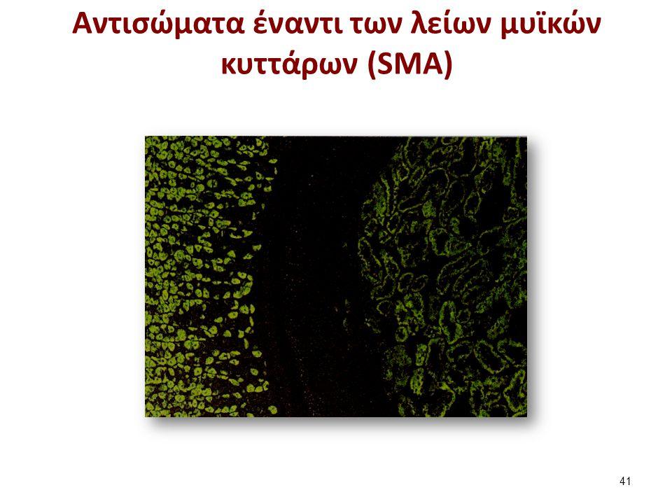 Aντισώματα έναντι των λείων μυϊκών κυττάρων (SMA) 41