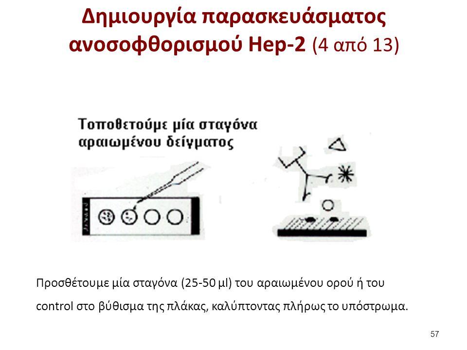 Δημιουργία παρασκευάσματος ανοσοφθορισμού Hep-2 (4 από 13) 57 Προσθέτουμε μία σταγόνα (25-50 μl) του αραιωμένου ορού ή του control στο βύθισμα της πλά