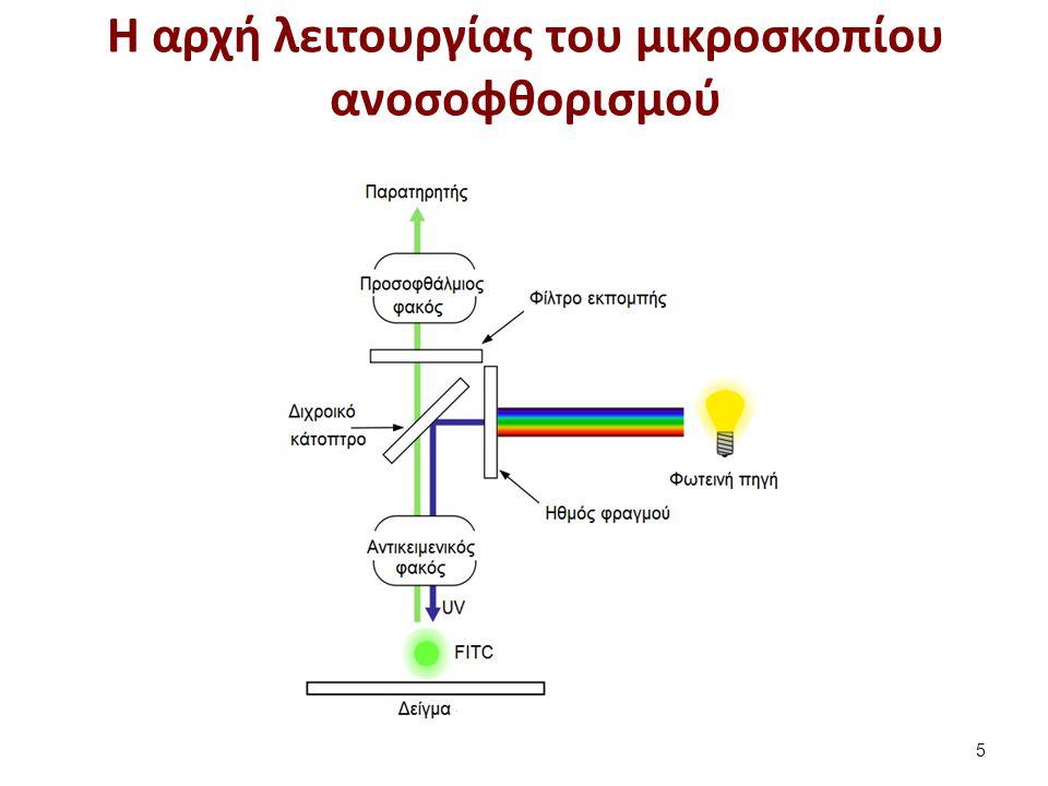 Η αρχή λειτουργίας του μικροσκοπίου ανοσοφθορισμού 5