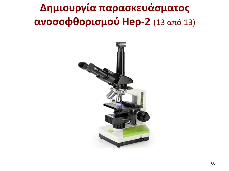 Δημιουργία παρασκευάσματος ανοσοφθορισμού Hep-2 (13 από 13) 66