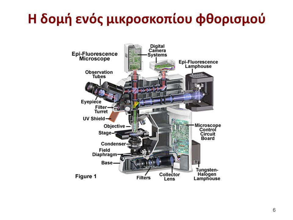 Η δομή ενός μικροσκοπίου φθορισμού 6