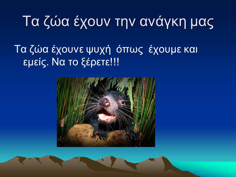 Tα ζώα έχουν την ανάγκη μας Τα ζώα έχουνε ψυχή όπως έχουμε και εμείς. Να το ξέρετε!!!