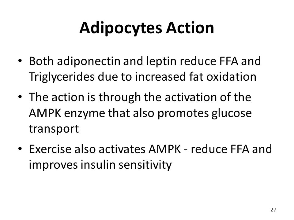 Adipocytes Action Both adiponectin and leptin reduce FFA and Triglycerides due to increased fat oxidation The action is through the activation of the AMPK enzyme that also promotes glucose transport Exercise also activates AMPK - reduce FFA and improves insulin sensitivity 27