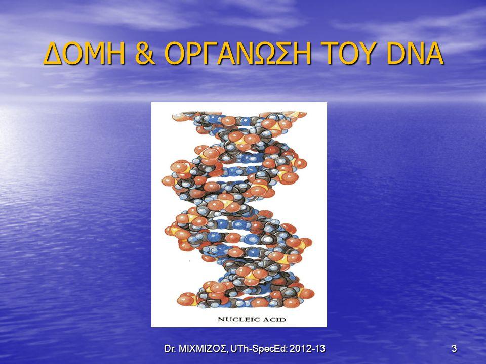 ΔΟΜΗ & ΟΡΓΑΝΩΣΗ ΤΟΥ DNA Dr. ΜΙΧΜΙΖΟΣ, UTh-SpecEd: 2012-13 3