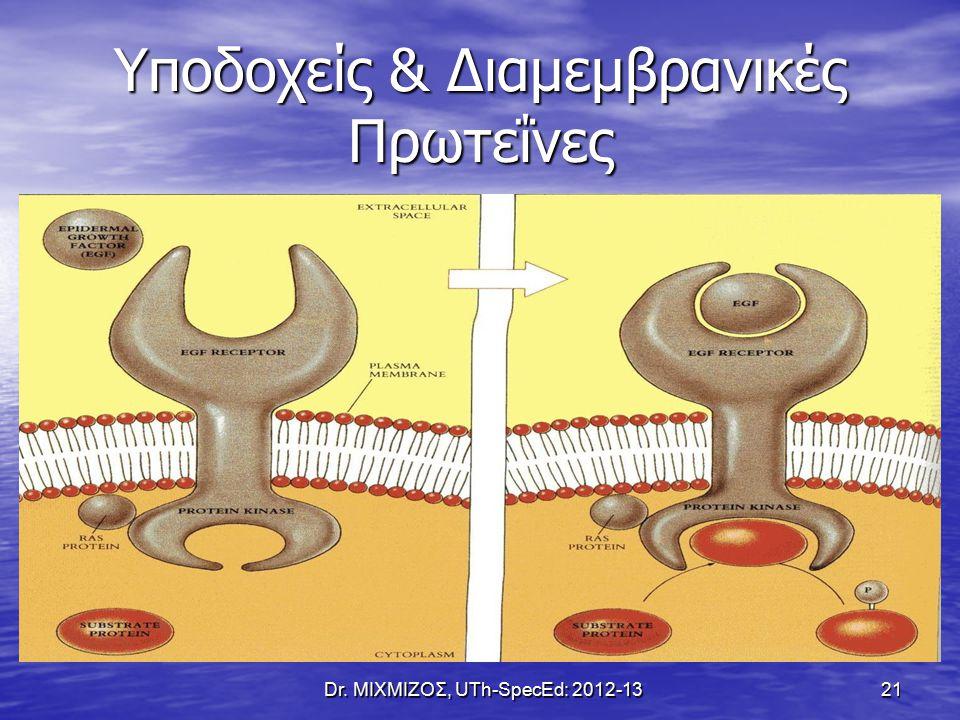 Υποδοχείς & Διαμεμβρανικές Πρωτεΐνες Dr. ΜΙΧΜΙΖΟΣ, UTh-SpecEd: 2012-13 21
