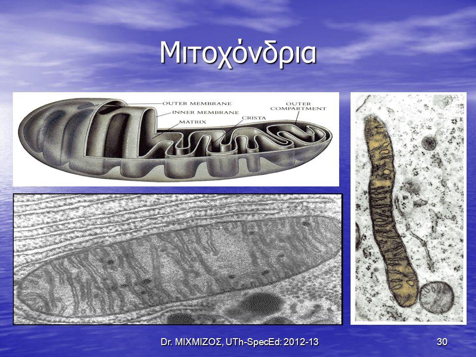 Μιτοχόνδρια Dr. ΜΙΧΜΙΖΟΣ, UTh-SpecEd: 2012-13 30