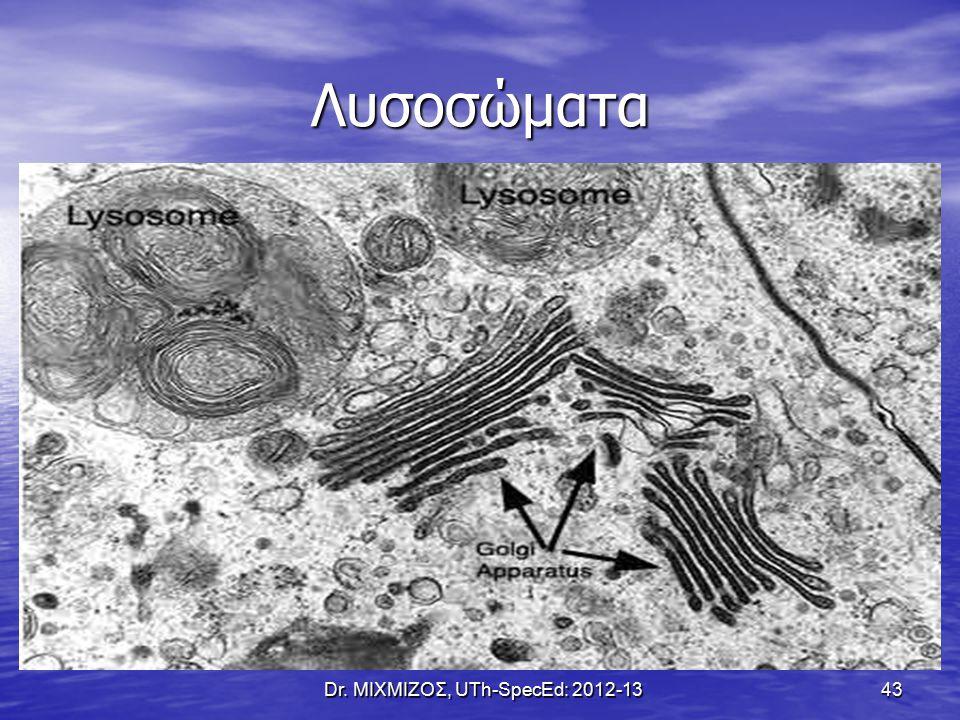 Λυσοσώματα Dr. ΜΙΧΜΙΖΟΣ, UTh-SpecEd: 2012-13 43