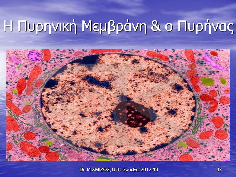 Η Πυρηνική Μεμβράνη & ο Πυρήνας Dr. ΜΙΧΜΙΖΟΣ, UTh-SpecEd: 2012-13 48
