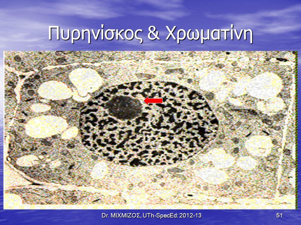 Πυρηνίσκος & Χρωματίνη Dr. ΜΙΧΜΙΖΟΣ, UTh-SpecEd: 2012-13 51