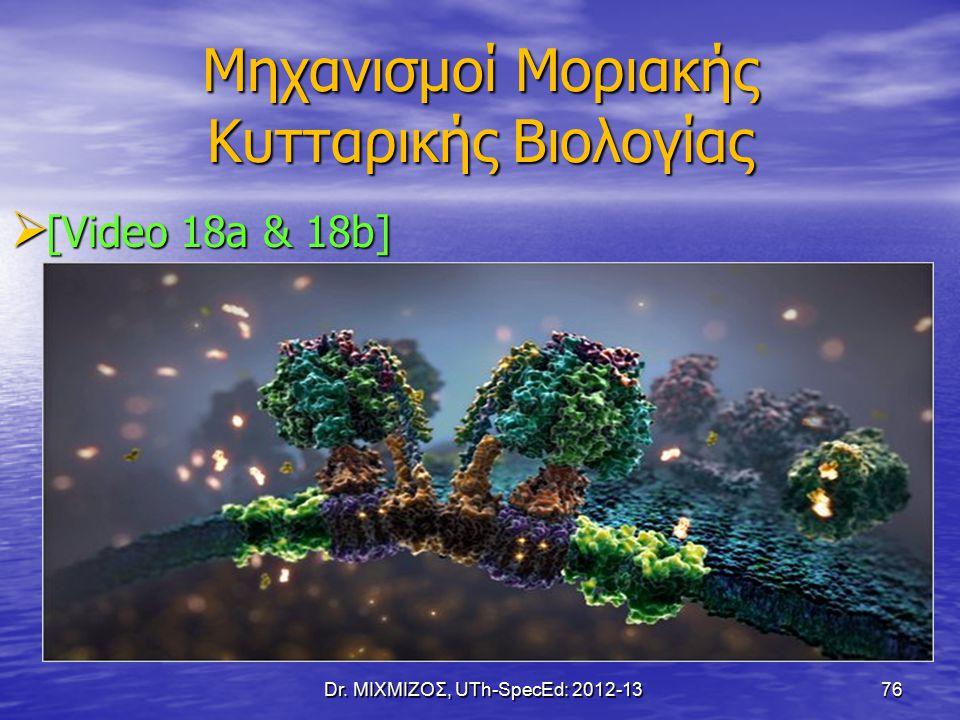 Μηχανισμοί Μοριακής Κυτταρικής Βιολογίας  [Video 18a & 18b] Dr. ΜΙΧΜΙΖΟΣ, UTh-SpecEd: 2012-13 76