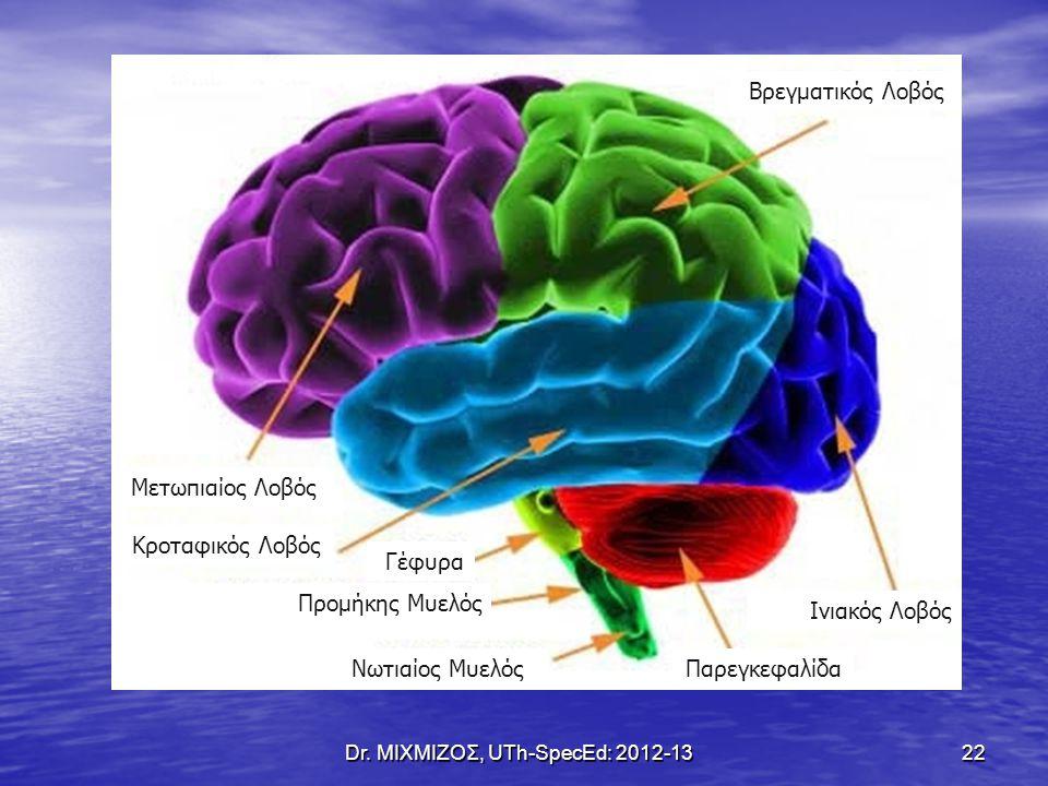 Dr. ΜΙΧΜΙΖΟΣ, UTh-SpecEd: 2012-13 22 Μετωπιαίος Λοβός Κροταφικός Λοβός Γέφυρα Βρεγματικός Λοβός Ινιακός Λοβός ΠαρεγκεφαλίδαΝωτιαίος Μυελός Προμήκης Μυ