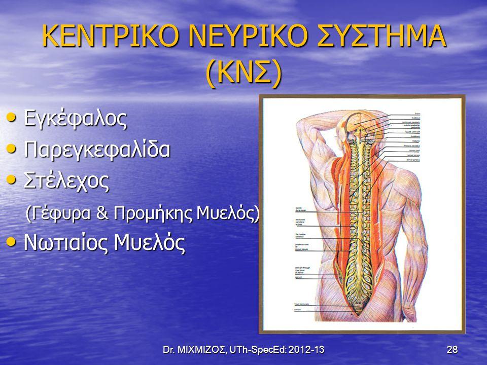ΚΕΝΤΡΙΚΟ ΝΕΥΡΙΚΟ ΣΥΣΤΗΜΑ (ΚΝΣ) Εγκέφαλος Εγκέφαλος Παρεγκεφαλίδα Παρεγκεφαλίδα Στέλεχος Στέλεχος (Γέφυρα & Προμήκης Μυελός) (Γέφυρα & Προμήκης Μυελός)