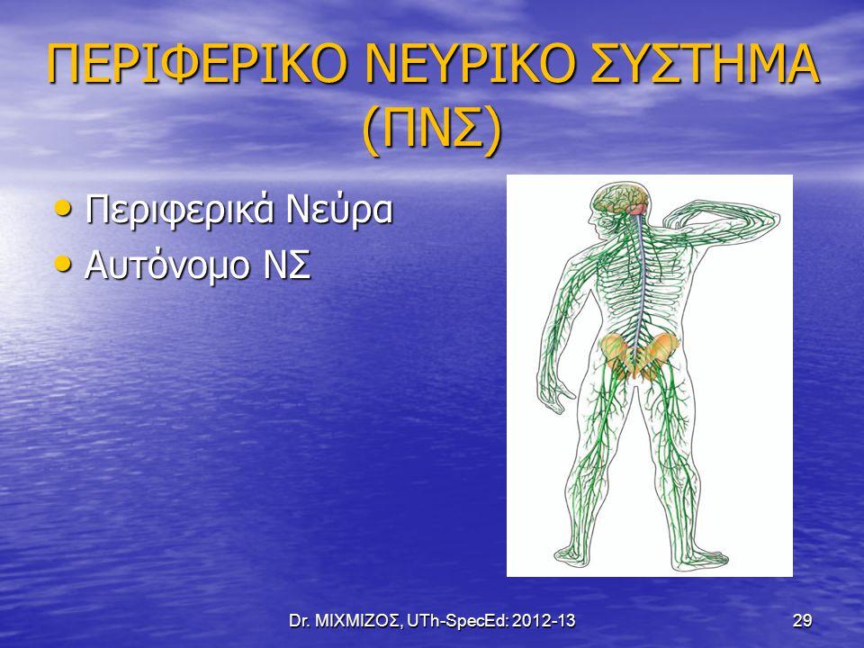 ΠΕΡΙΦΕΡΙΚΟ ΝΕΥΡΙΚΟ ΣΥΣΤΗΜΑ (ΠΝΣ) Περιφερικά Νεύρα Περιφερικά Νεύρα Αυτόνομο ΝΣ Αυτόνομο ΝΣ Dr. ΜΙΧΜΙΖΟΣ, UTh-SpecEd: 2012-13 29