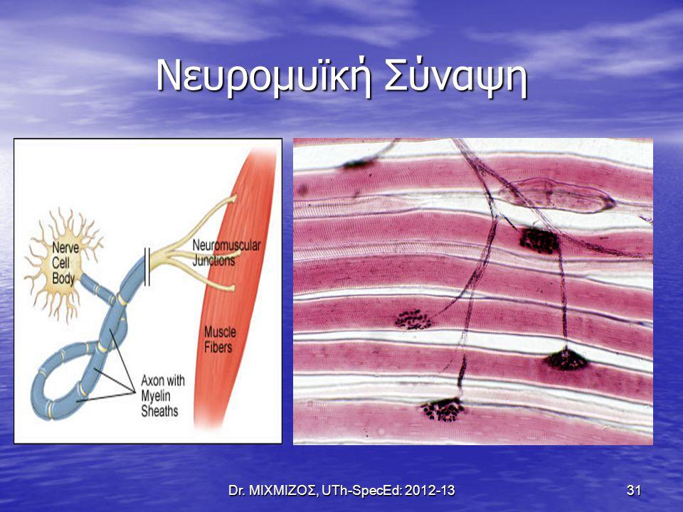 Νευρομυϊκή Σύναψη Dr. ΜΙΧΜΙΖΟΣ, UTh-SpecEd: 2012-13 31