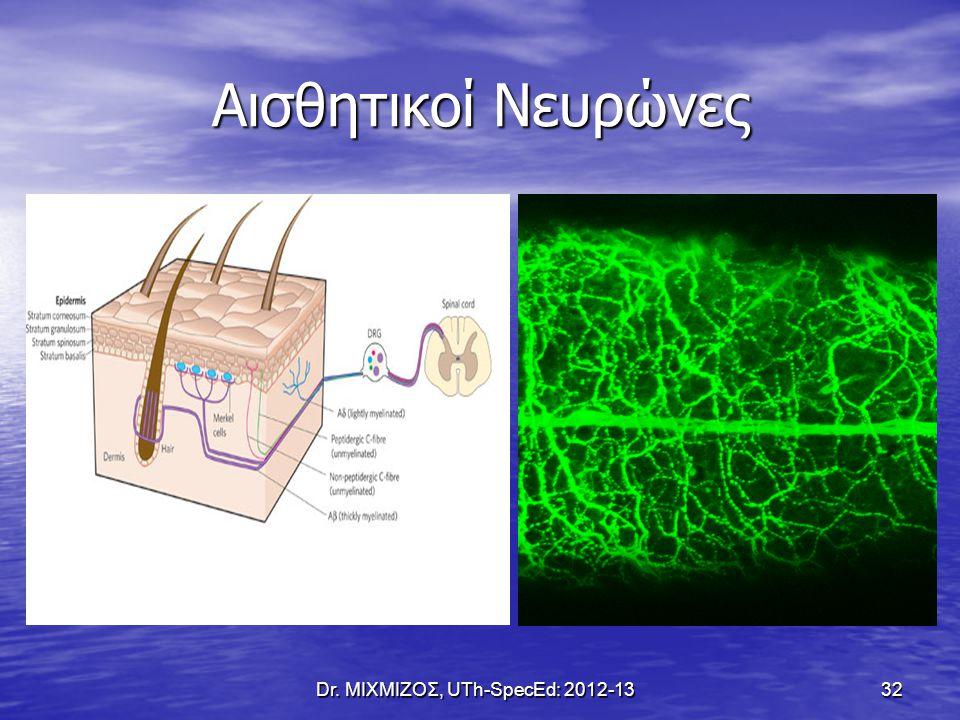 Αισθητικοί Νευρώνες Dr. ΜΙΧΜΙΖΟΣ, UTh-SpecEd: 2012-13 32