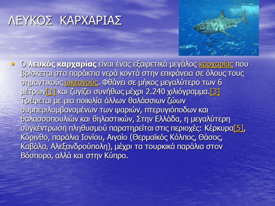 ΛΕΥΚΟΣ ΚΑΡΧΑΡΙΑΣ Ο λευκός καρχαρίας είναι ένας εξαιρετικά μεγάλος καρχαρίας που βρίσκεται στα παράκτια νερά κοντά στην επιφάνεια σε όλους τους σημαντι