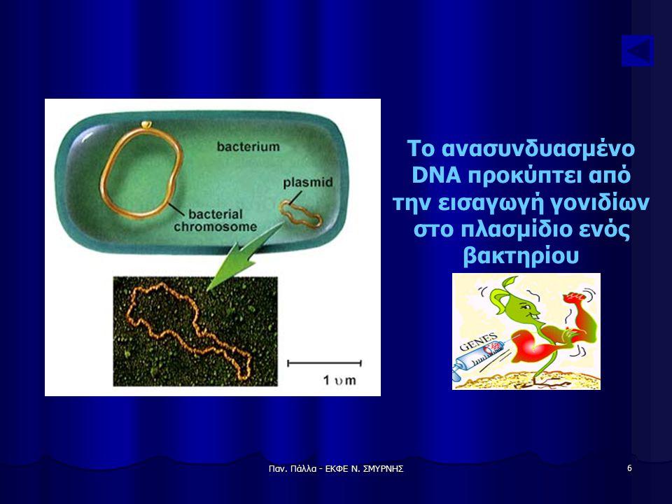 Παν. Πάλλα - ΕΚΦΕ Ν. ΣΜΥΡΝΗΣ 7 Λειτουργία της περιοριστικής ενδονουκλεάσης της E.coli
