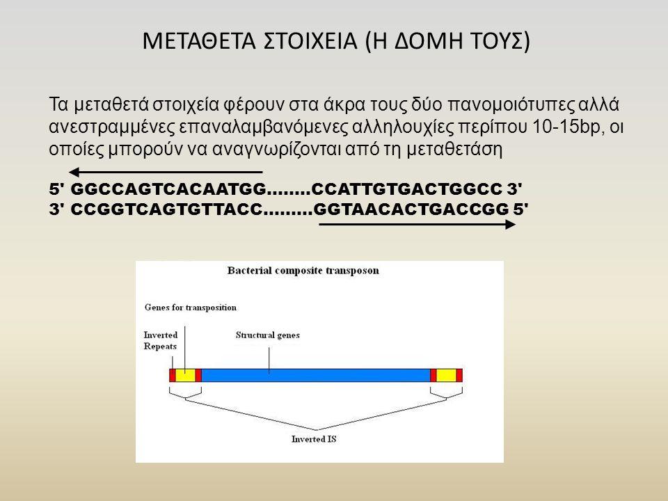 ΜΕΤΑΘΕΤΑ ΣΤΟΙΧΕΙΑ (Η ΔΟΜΗ ΤΟΥΣ) Τα μεταθετά στοιχεία φέρουν στα άκρα τους δύο πανομοιότυπες αλλά ανεστραμμένες επαναλαμβανόμενες αλληλουχίες περίπου 1