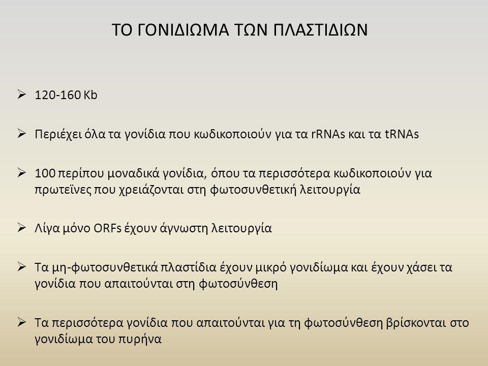 ΤΟ ΓΟΝΙΔΙΩΜΑ ΤΩΝ ΠΛΑΣΤΙΔΙΩΝ  120-160 Κb  Περιέχει όλα τα γονίδια που κωδικοποιούν για τα rRNAs και τα tRNAs  100 περίπου μοναδικά γονίδια, όπου τα