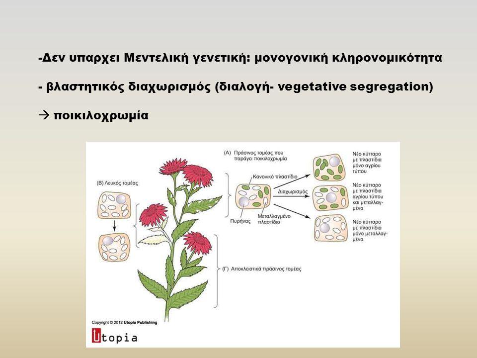 -Δεν υπαρχει Μεντελική γενετική: μονογονική κληρονομικότητα - βλαστητικός διαχωρισμός (διαλογή- vegetative segregation)  ποικιλοχρωμία