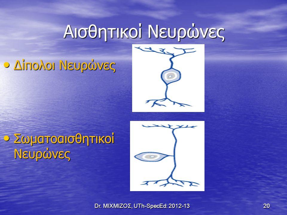 Αισθητικοί Νευρώνες Δίπολοι Νευρώνες Δίπολοι Νευρώνες Σωματοαισθητικοί Νευρώνες Σωματοαισθητικοί Νευρώνες Dr. ΜΙΧΜΙΖΟΣ, UTh-SpecEd: 2012-13 20