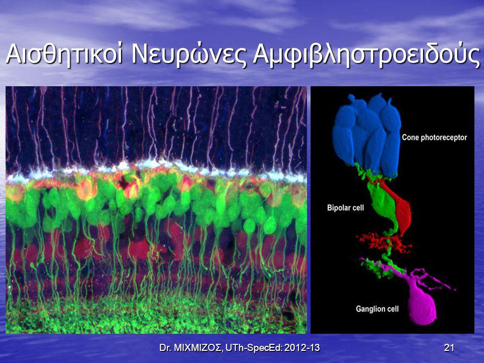 Αισθητικοί Νευρώνες Αμφιβληστροειδούς Dr. ΜΙΧΜΙΖΟΣ, UTh-SpecEd: 2012-13 21