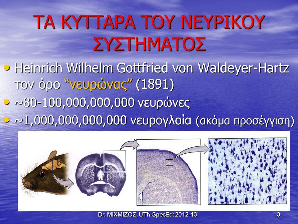 """ΤΑ ΚΥΤΤΑΡΑ ΤΟΥ ΝΕΥΡΙΚΟΥ ΣΥΣΤΗΜΑΤΟΣ Heinrich Wilhelm Gottfried von Waldeyer-Hartz τον όρο """"νευρώνας"""" (1891) Heinrich Wilhelm Gottfried von Waldeyer-Har"""