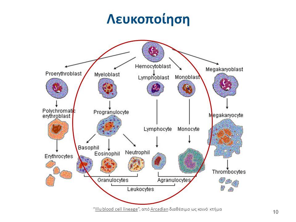 """Λευκοποίηση 10 """"Illu blood cell lineage"""", από Arcadian διαθέσιμο ως κοινό κτήμαIllu blood cell lineageArcadian"""