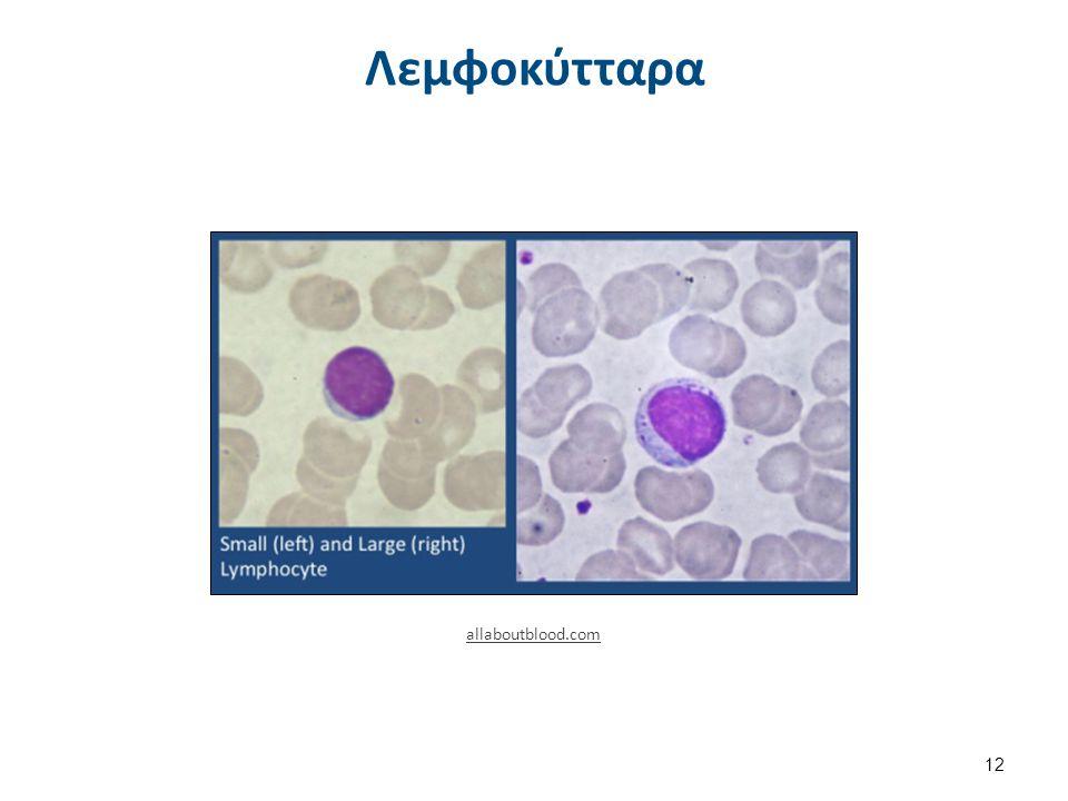 Λεμφοκύτταρα 12 allaboutblood.com