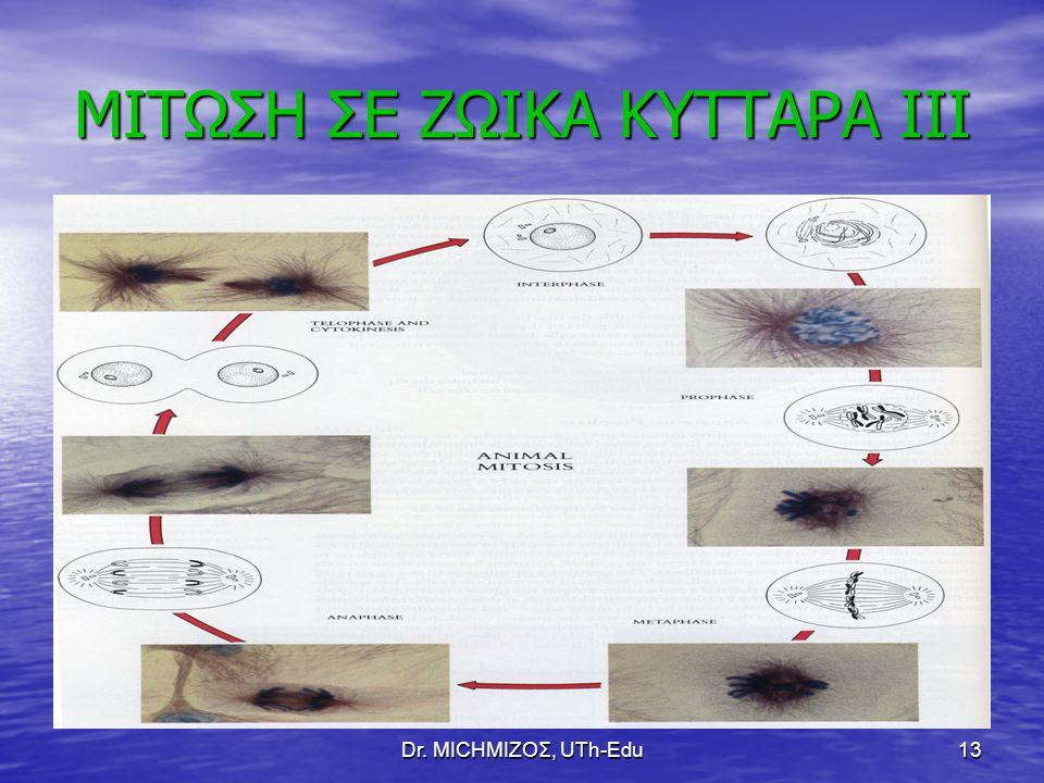 Dr. ΜΙCHΜΙΖΟΣ, UTh-Edu13 ΜΙΤΩΣΗ ΣΕ ΖΩΙΚΑ ΚΥΤΤΑΡΑ ΙΙΙ