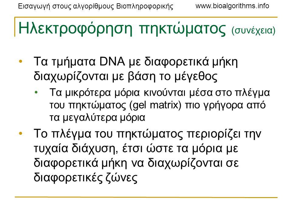 Εισαγωγή στους αλγορίθμους Βιοπληροφορικής www.bioalgorithms.info Ηλεκτροφόρηση πηκτώματος (συνέχεια) Τα τμήματα DNA με διαφορετικά μήκη διαχωρίζονται με βάση το μέγεθος Τα μικρότερα μόρια κινούνται μέσα στο πλέγμα του πηκτώματος (gel matrix) πιο γρήγορα από τα μεγαλύτερα μόρια Το πλέγμα του πηκτώματος περιορίζει την τυχαία διάχυση, έτσι ώστε τα μόρια με διαφορετικά μήκη να διαχωρίζονται σε διαφορετικές ζώνες