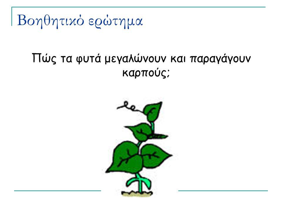 Βοηθητικό ερώτημα Πώς τα φυτά μεγαλώνουν και παραγάγουν καρπούς;