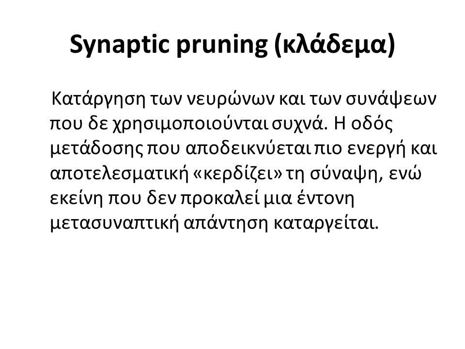 Synaptic pruning (κλάδεμα) Κατάργηση των νευρώνων και των συνάψεων που δε χρησιμοποιούνται συχνά.