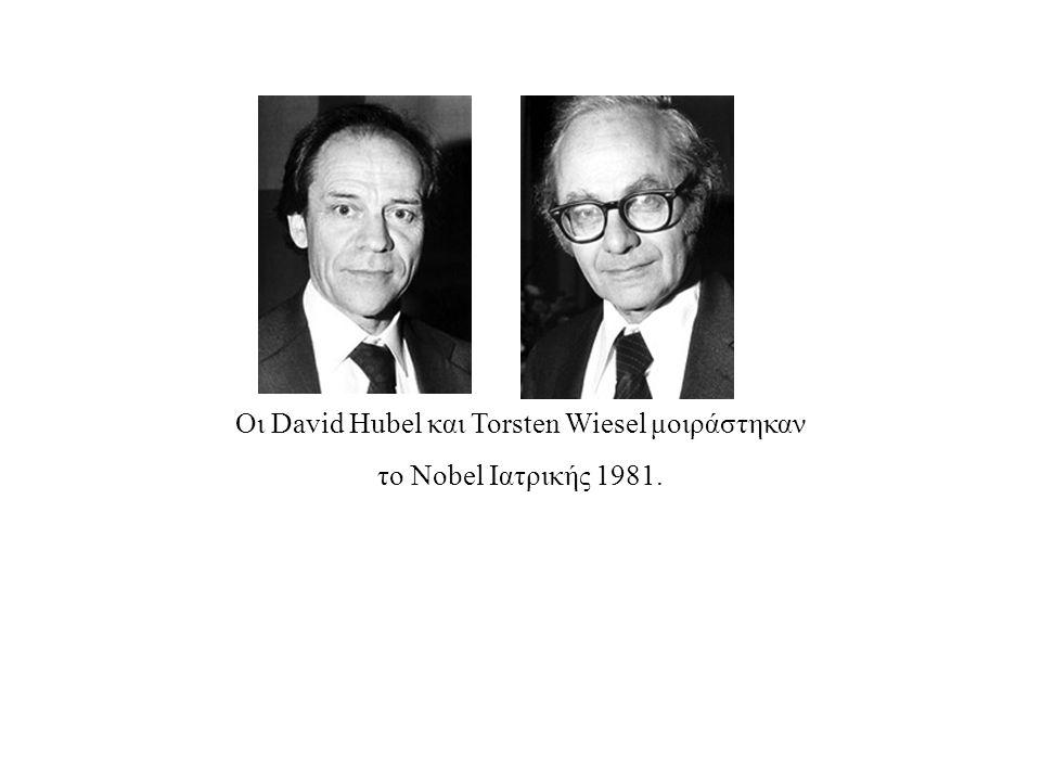 Οι David Hubel και Torsten Wiesel μοιράστηκαν το Nobel Ιατρικής 1981.