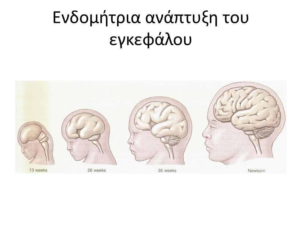 Ο Φλοιός του εγκεφάλου Η πιο αναπτυγμένη και η πιο περίπλοκη εγκεφαλική δομή, περιβάλλει το υπόλοιπο του εγκεφάλου, 85% της μάζας του.