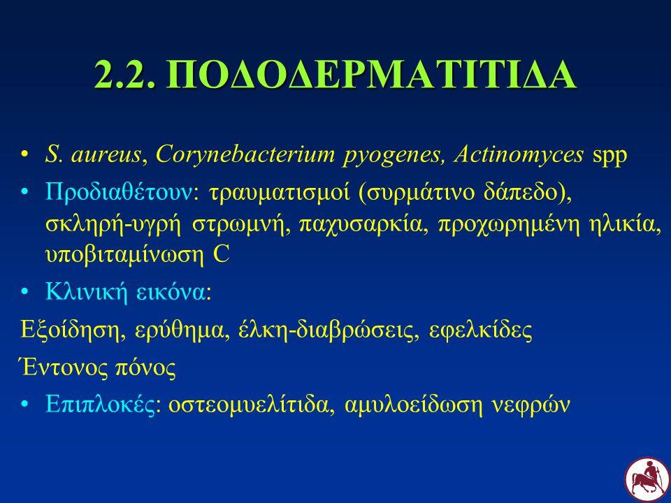 2.2. ΠΟΔΟΔΕΡΜΑΤΙΤΙΔΑ S. aureus, Corynebacterium pyogenes, Actinomyces spp Προδιαθέτουν: τραυματισμοί (συρμάτινο δάπεδο), σκληρή-υγρή στρωμνή, παχυσαρκ