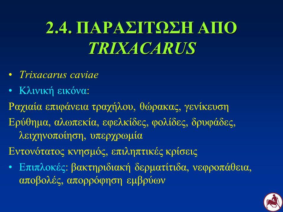 2.4. ΠΑΡΑΣΙΤΩΣΗ ΑΠΟ TRIXACARUS Trixacarus caviae Κλινική εικόνα: Ραχιαία επιφάνεια τραχήλου, θώρακας, γενίκευση Ερύθημα, αλωπεκία, εφελκίδες, φολίδες,