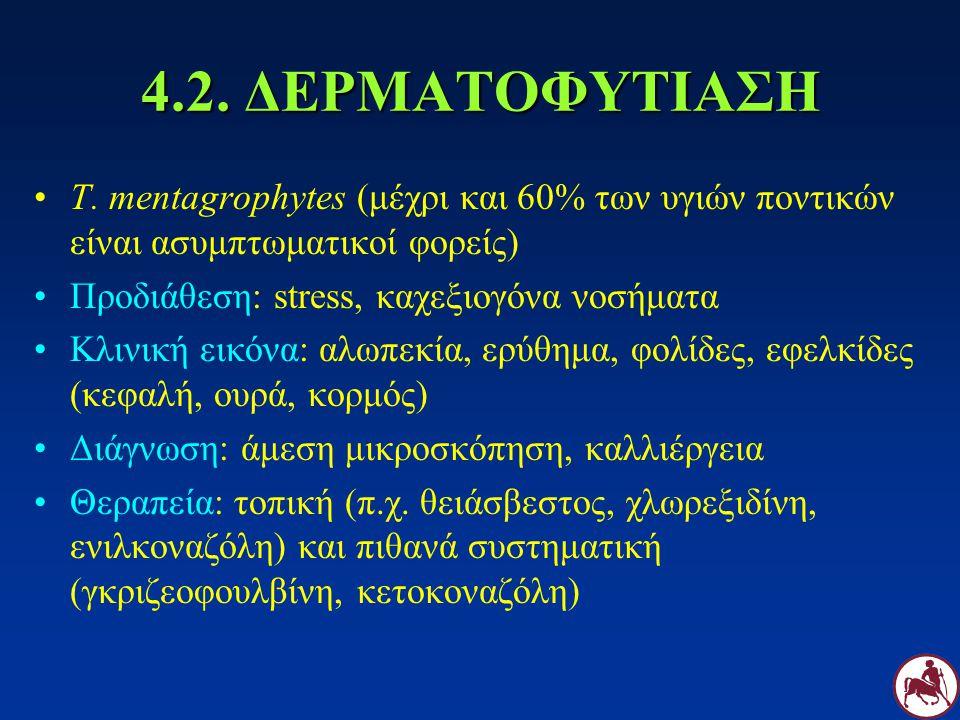 4.2. ΔΕΡΜΑΤΟΦΥΤΙΑΣΗ T. mentagrophytes (μέχρι και 60% των υγιών ποντικών είναι ασυμπτωματικοί φορείς) Προδιάθεση: stress, καχεξιογόνα νοσήματα Κλινική